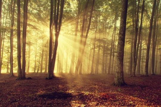 住友林業の年収水準は業界最高って本当?【社員から聞きました】の画像